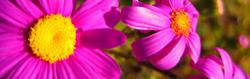 flowers-thumbnail
